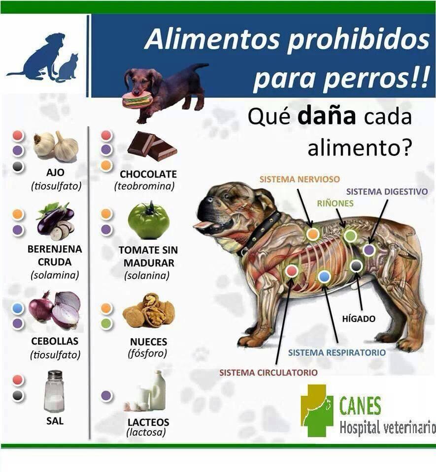 Alimentos nocivos para tu perro tu primer perro for Alimento para perros